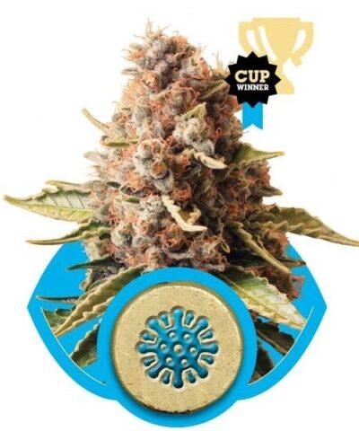 Euphoria cannabis frø - Subseed.dk