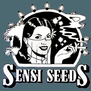Sensi seeds cannabis frø