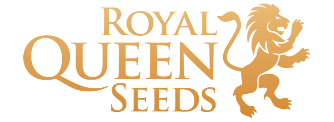 Royal queen seeds cannabis frø
